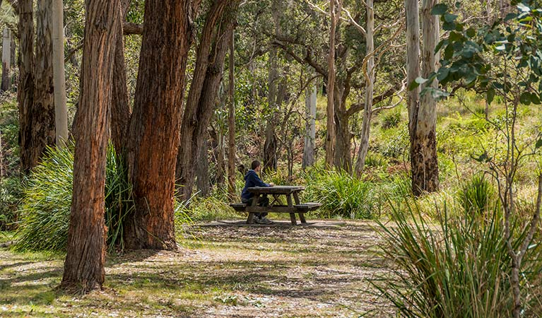 Koreelah Creek campground - Tourism Gold Coast