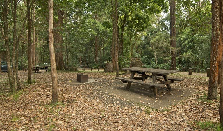 Sheepstation Creek campground - Tourism Gold Coast
