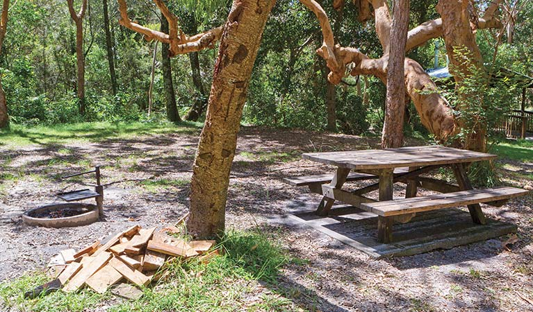 Station Creek campground - Tourism Gold Coast