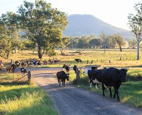 Tommerups Dairy Farmstay - Tourism Gold Coast