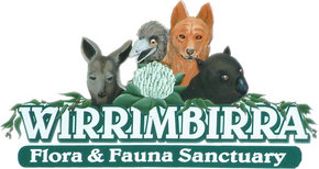 Wirrimbirra Sanctuary - Tourism Gold Coast
