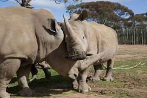 Monarto Zoo - Tourism Gold Coast