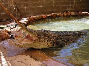Wyndham Zoological Gardens and Crocodile Park - Tourism Gold Coast