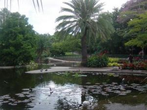 Brisbane City Botanic Gardens - Tourism Gold Coast
