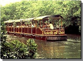 Daintree Rainforest River Trains - Tourism Gold Coast