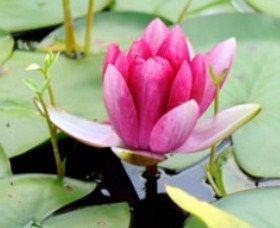 The Lotus Day Spa and Retreat - Tourism Gold Coast