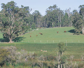 Scenic Drives - Bunbury Collie Donnybrook - Tourism Gold Coast