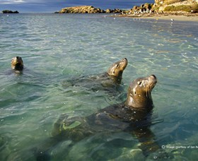 Shoalwater Islands Marine Park - Tourism Gold Coast