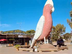 The Big Galah - Tourism Gold Coast