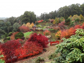 Emu Valley Rhododendron Garden - Tourism Gold Coast