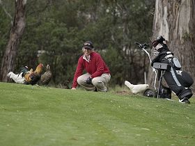 Tasmania Golf Club - The - Tourism Gold Coast