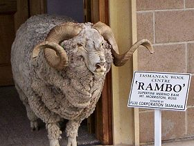 Tasmanian Wool Centre - Tourism Gold Coast
