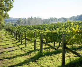 Surveyor's Hill Vineyards - Tourism Gold Coast