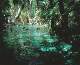 Mataranka Thermal Pool - Tourism Gold Coast