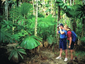 Mount Sorrow Ridge Trail Daintree National Park - Tourism Gold Coast