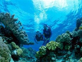Coral Gardens Dive Site - Tourism Gold Coast