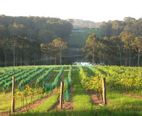 Tilba Valley Wines - Tourism Gold Coast