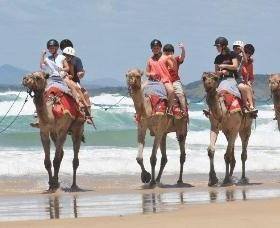 Camel Rides with Coffs Coast Camels - Tourism Gold Coast