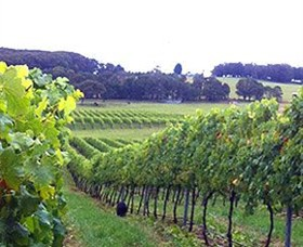 Banjo's Run Winery and Vineyard - Tourism Gold Coast