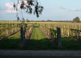 Water Wheel Vineyards - Tourism Gold Coast