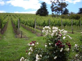 Pembroke Estate Vineyard - Tourism Gold Coast