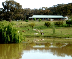 Clearview Alpacas - Tourism Gold Coast