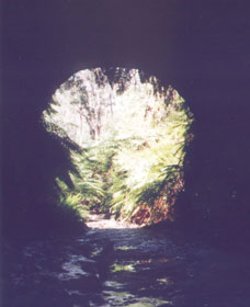 Glow Worm Tunnel - Tourism Gold Coast