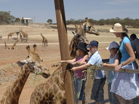 Monarto Open Range Zoo - Tourism Gold Coast