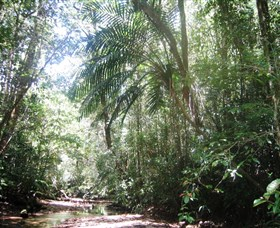 Mount Lewis National Park - Tourism Gold Coast