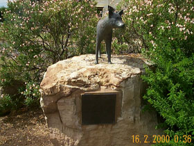 Dingo Statue - Tourism Gold Coast