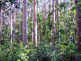 Cathu State Forest - Tourism Gold Coast