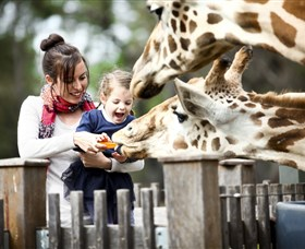 Taronga Western Plains Zoo Dubbo - Tourism Gold Coast