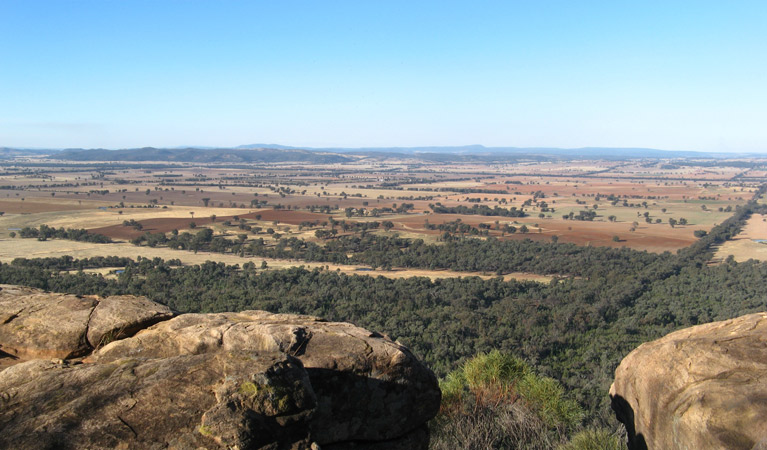 Basin Gully to Eualdrie lookout track - Tourism Gold Coast