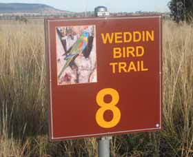 Weddin Bird Trails - Tourism Gold Coast