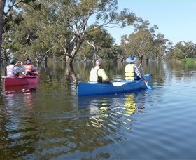 Doodle Cooma Swamp - Tourism Gold Coast