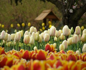 Tulip Top Gardens - Tourism Gold Coast