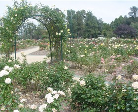 Victoria Park Rose Garden - Tourism Gold Coast