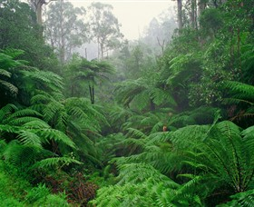 Tarra Bulga National Park - Tourism Gold Coast