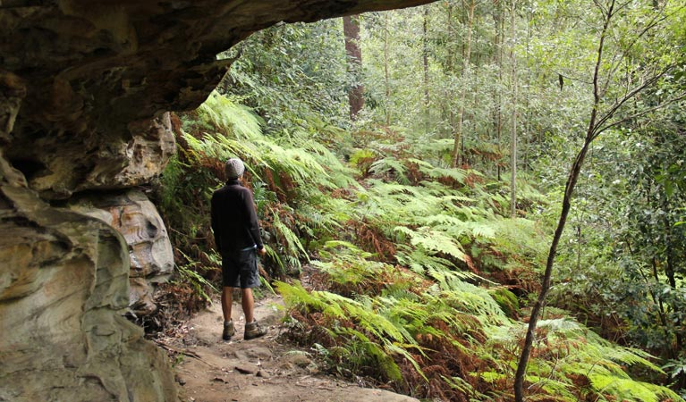 Dharug National Park - Tourism Gold Coast