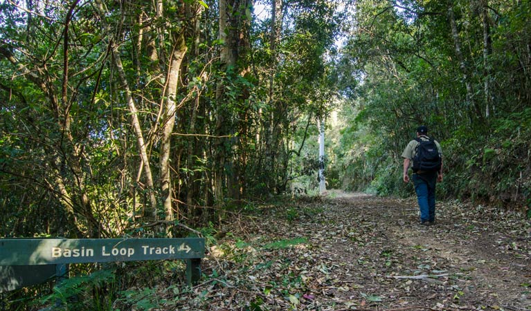 Basin Loop track - Tourism Gold Coast