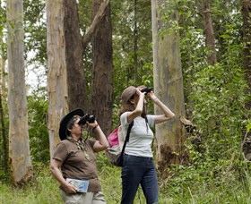 Chichester State Forest - Tourism Gold Coast