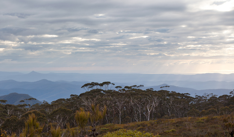 Mount Budawang trail - Tourism Gold Coast