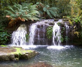 Barrington Tops National Park Walks - Tourism Gold Coast