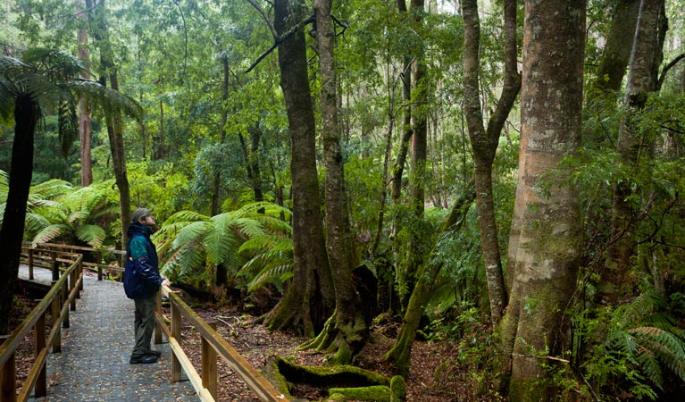 Monga National Park - Tourism Gold Coast