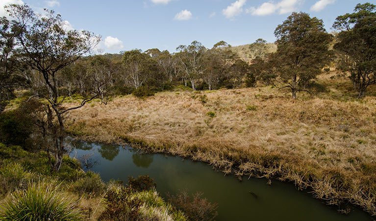 Werrikimbe National Park