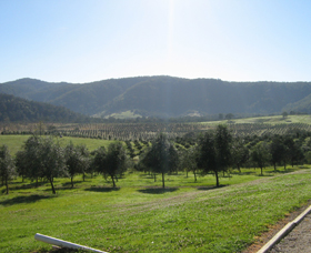 Hastings Valley Olives - Tourism Gold Coast