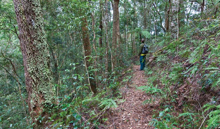 Blackbutt walking track - Tourism Gold Coast