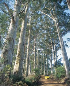 The Great Forest Trees Drive - Tourism Gold Coast