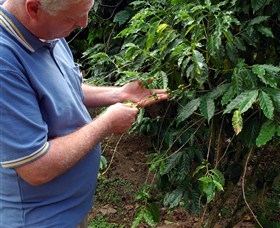 Wombah Coffee Plantation - Tourism Gold Coast