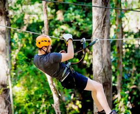 TreeTop Challenge Currumbin - Tourism Gold Coast